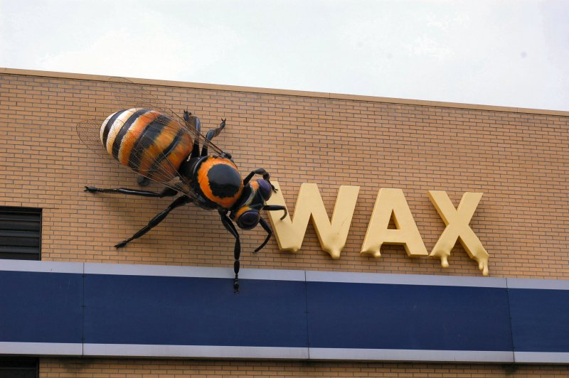 Honing bij – Wax